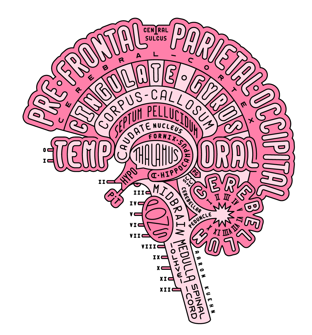 A neuro-anatomical diagram and model of the human brain in sagittal cross section, constructed using only styled typography.